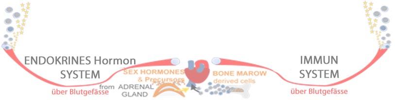 BildELEMENT SYSTEME HORMON und IMMUN 50% Trockenes Auge, Dry Eye .jpg