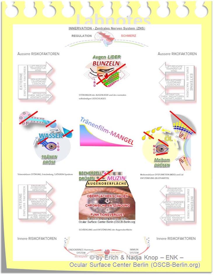 =>  direkt zu Krankheits-Faktoren und Therapie Auswahl