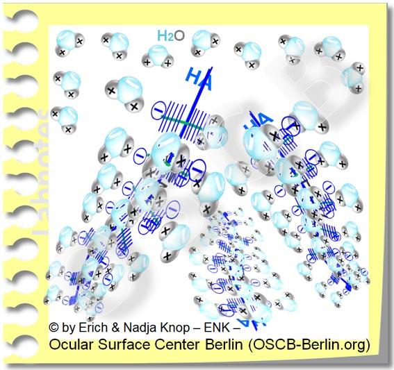 In  wässrigen Tränenersatzmitteln  ist  Wasser  ( H2O ) gebunden an grosse wasserbindende Moleküle - oft  Hyaluronsäure  ( HA ) - damit es länger an der Augenoberfläche verbleibt und sie schützt.