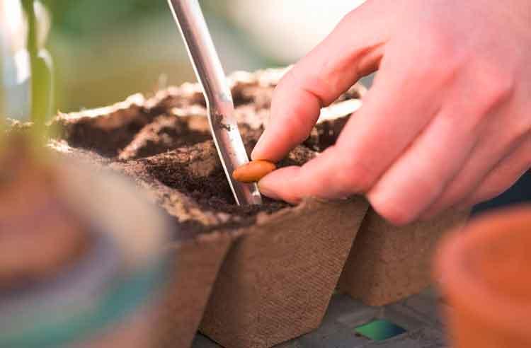 seed-sowing.jpg