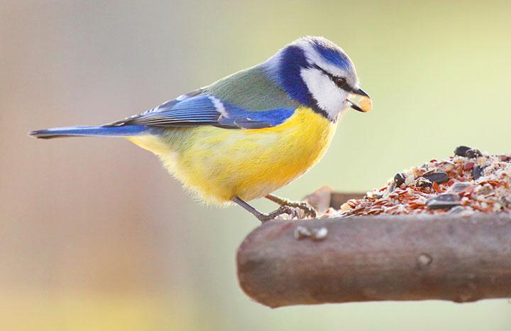 garden-bird-eating.jpg