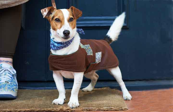 Dog-coat-3.jpg