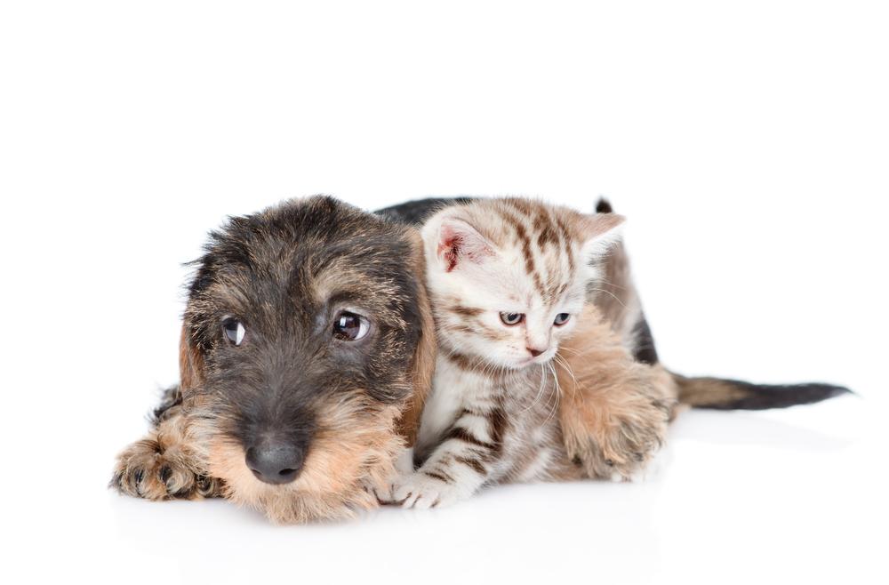 pet-care-card-emergency.jpg
