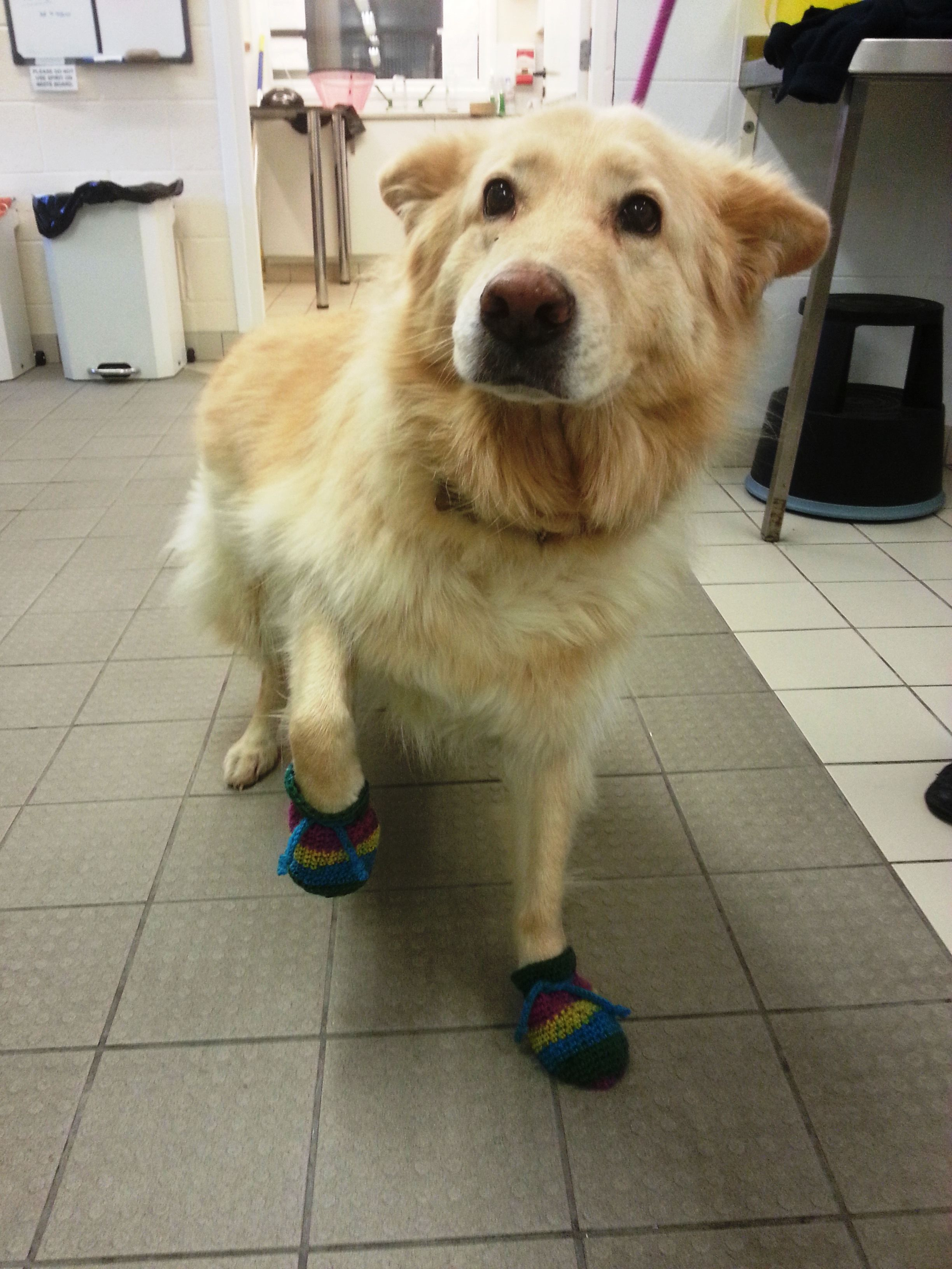 One happy dog proudly showing off his socks!