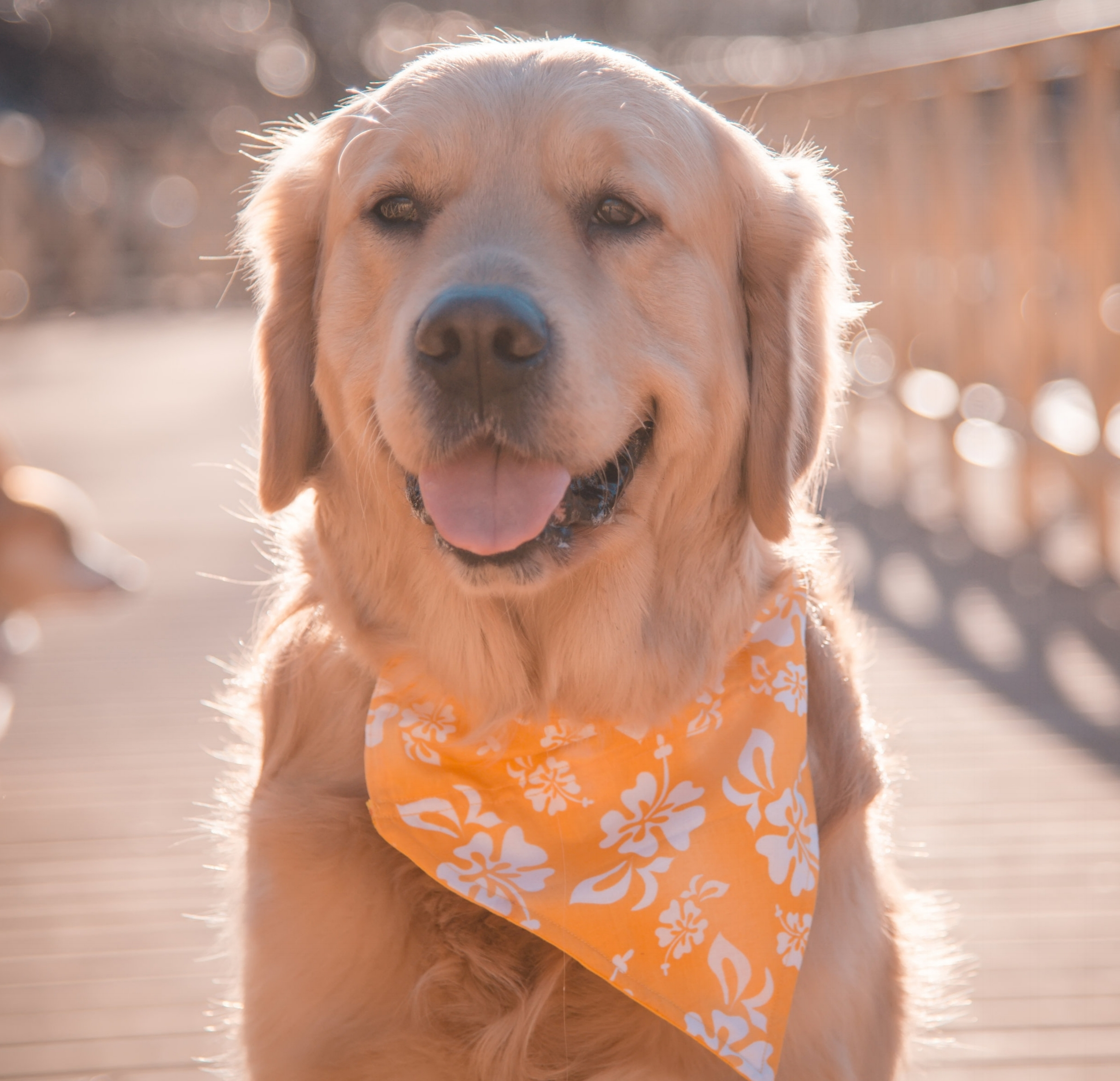 bandanas for dogs
