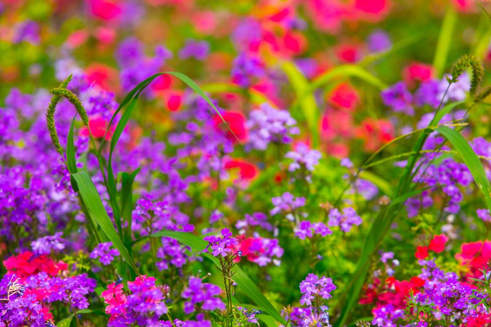 colourful-garden