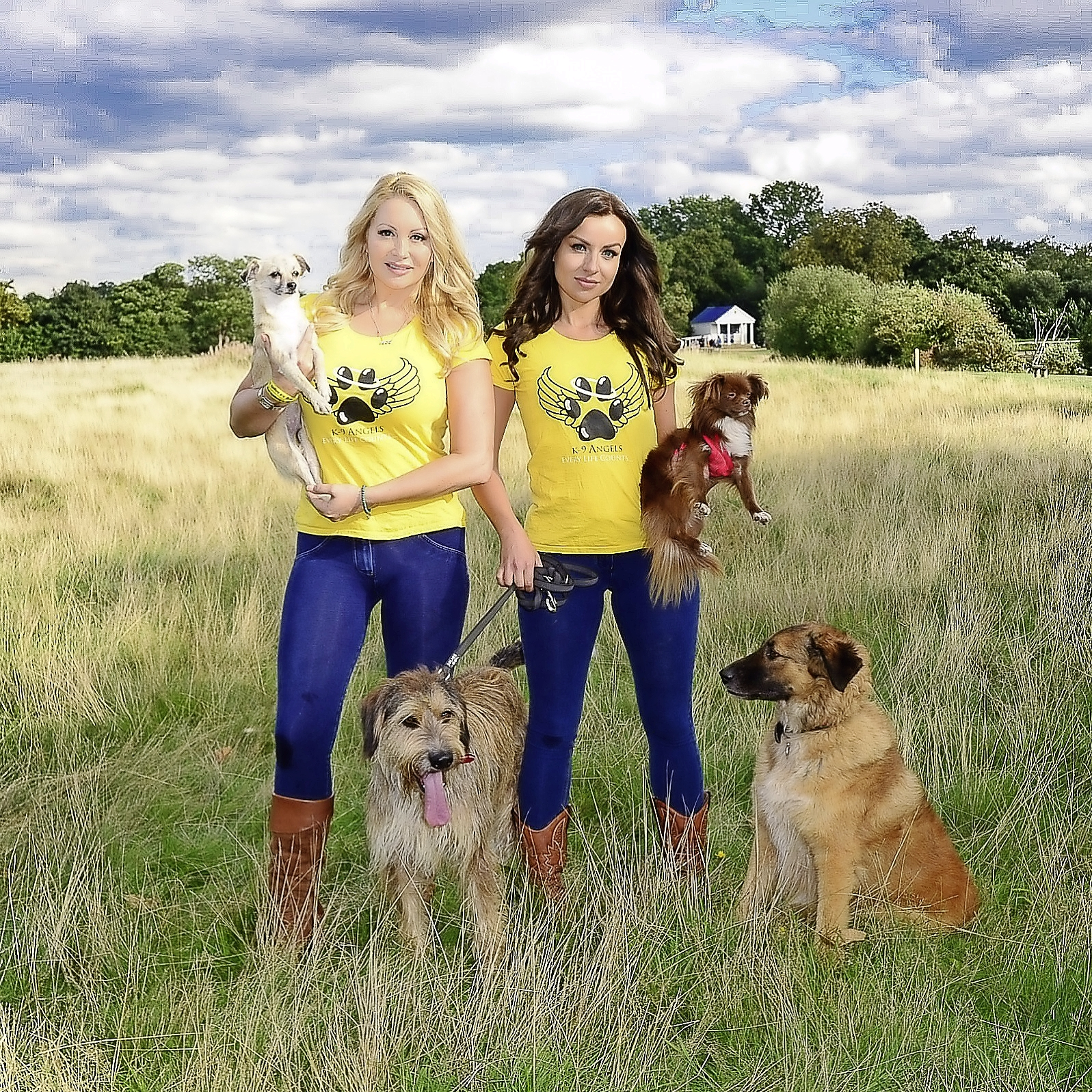 The amazing K-9 Angels in action