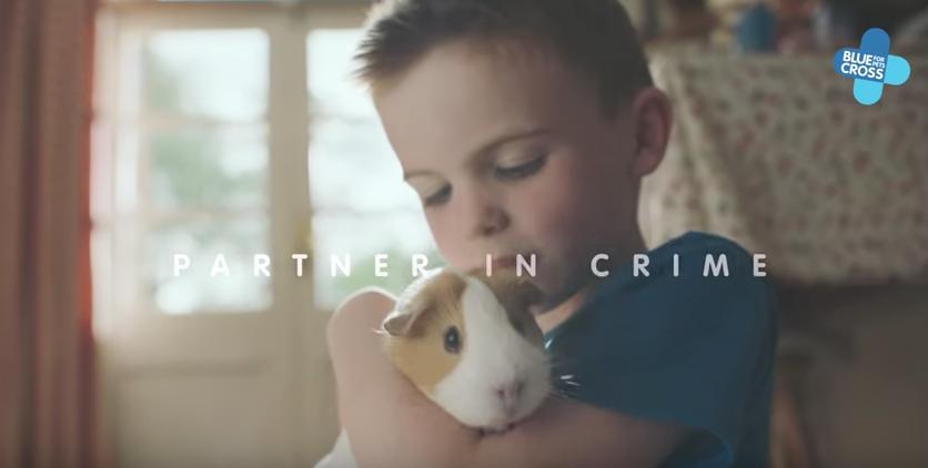 blue-cross-guinea-pig