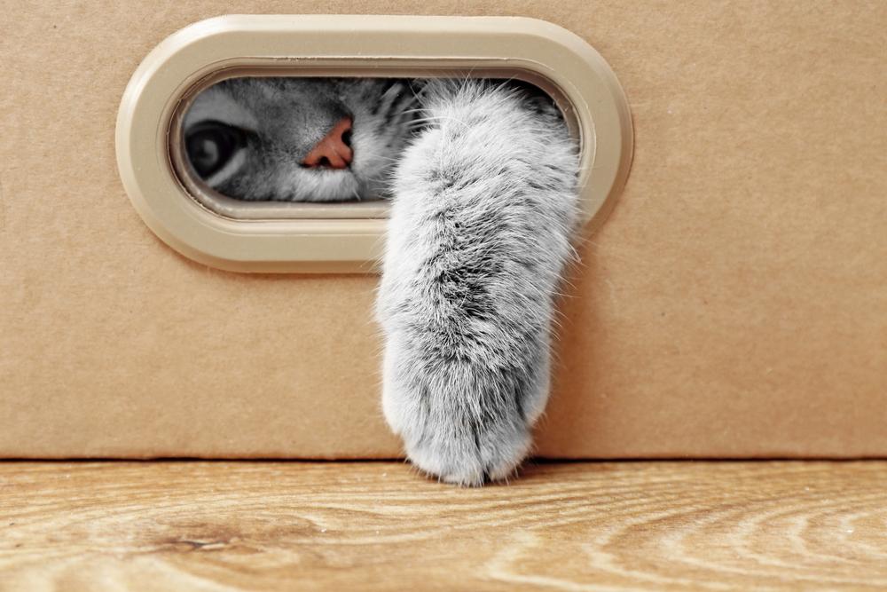 cat_theft