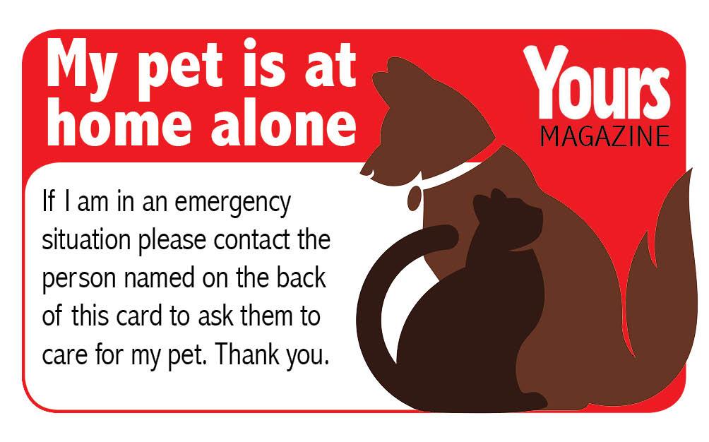 pet care card copy.jpg