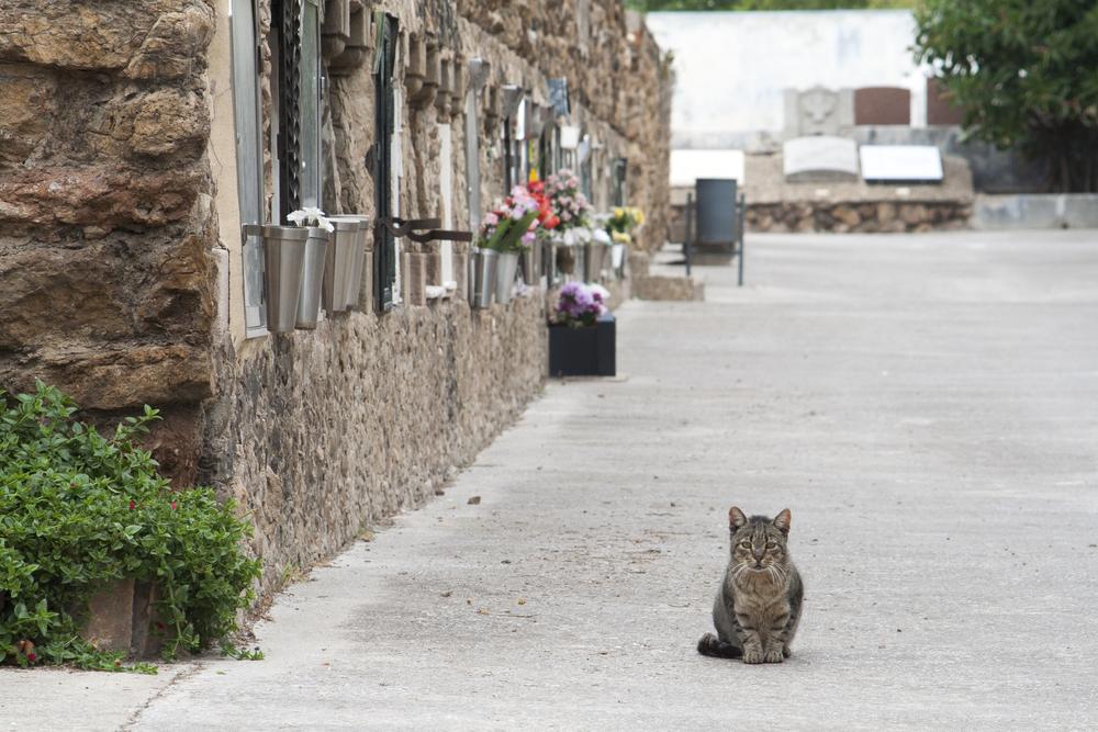 missing-cat.jpg