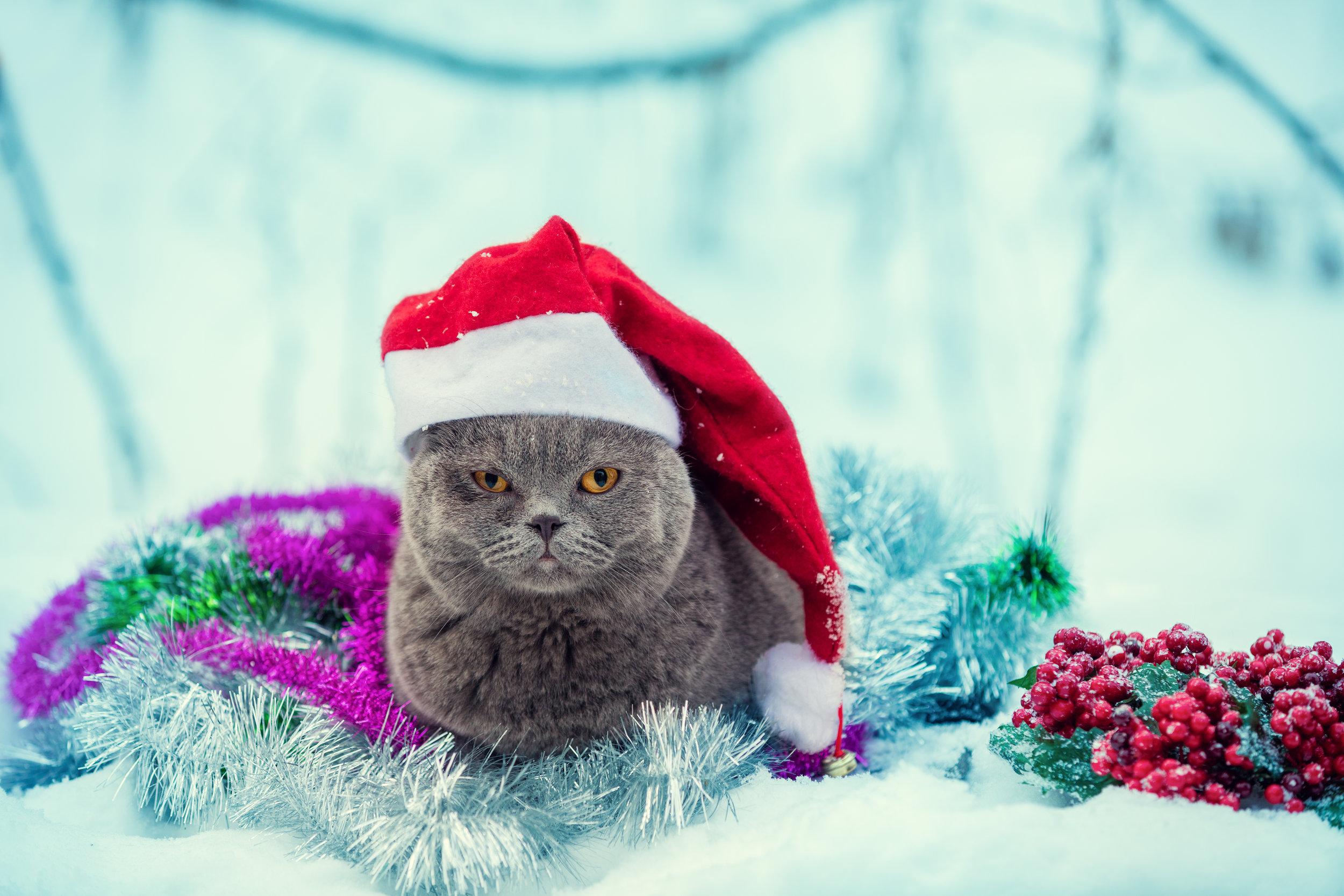 cat-tinsel.jpg