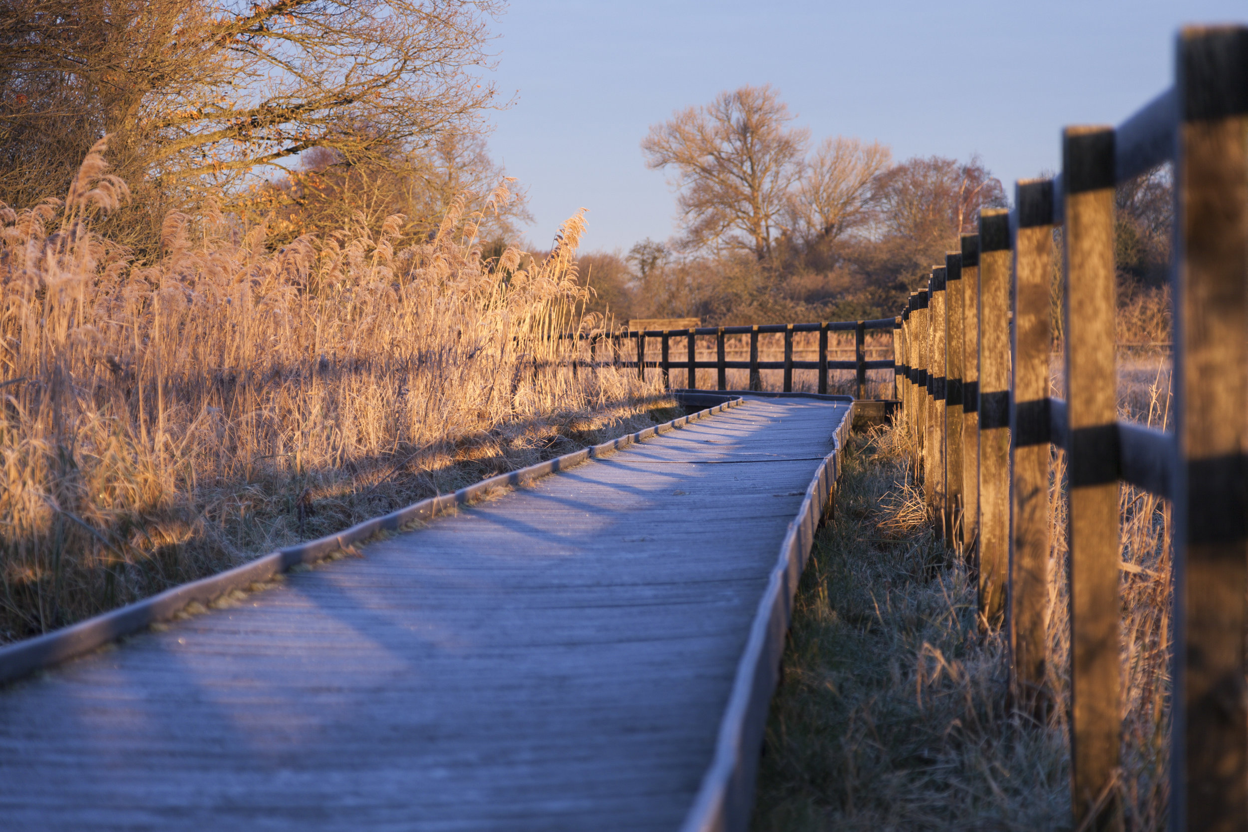 Wicken Fen National Trust Images Justin Minns 1294530.jpg
