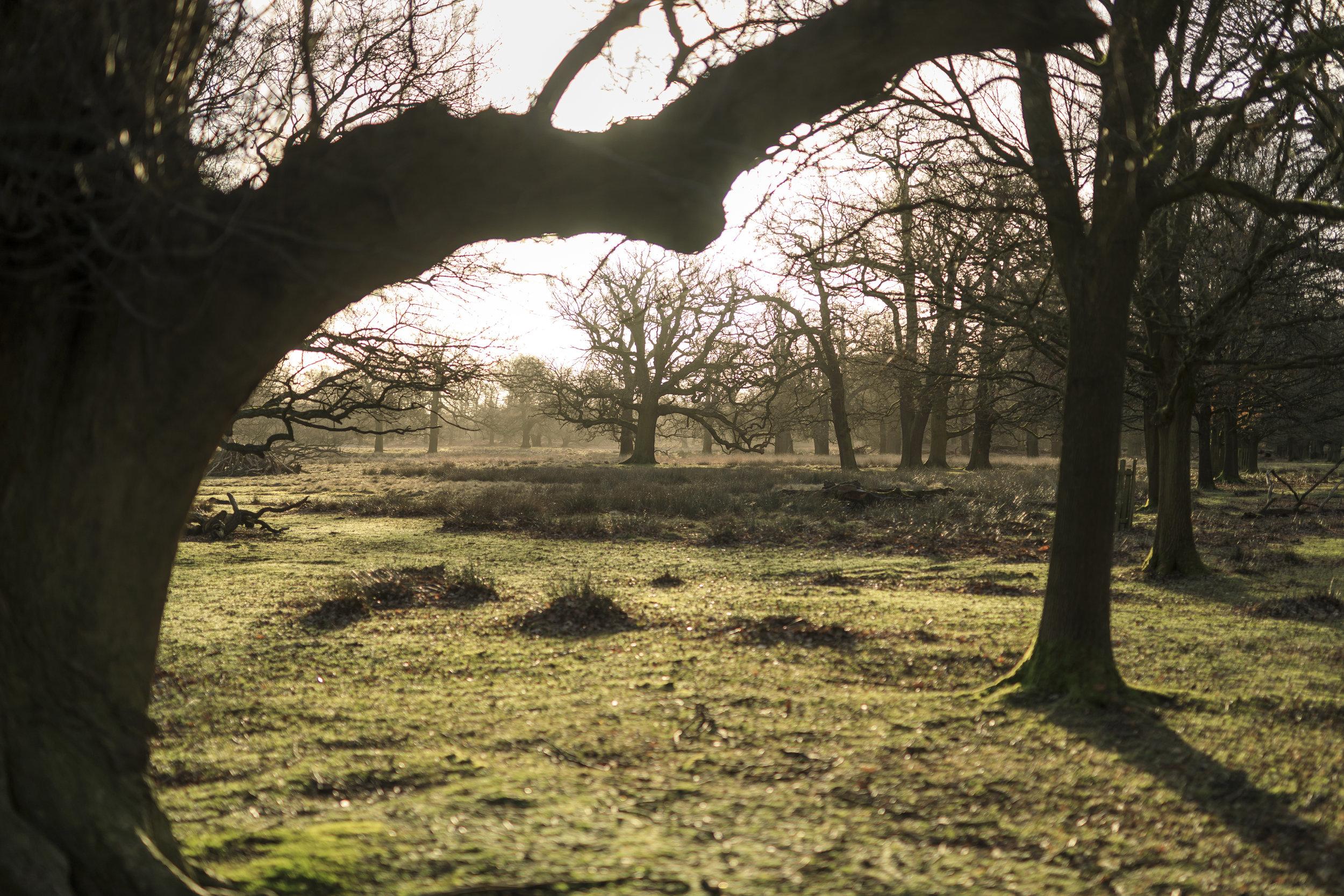 Dunham Massey National Trust Images John Miller 1306592.jpg