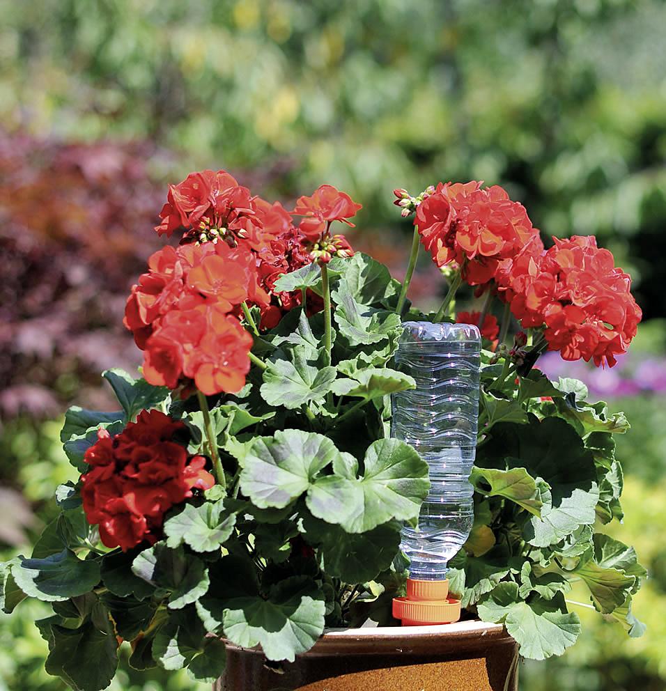 WATER CONE - l-AquaSolo-Geranium.jpg