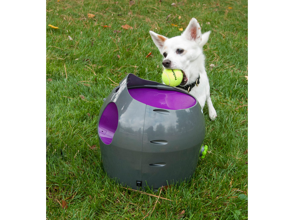 PETSAFEAutomatic-Ball-Launcher-Lifestyle.jpg