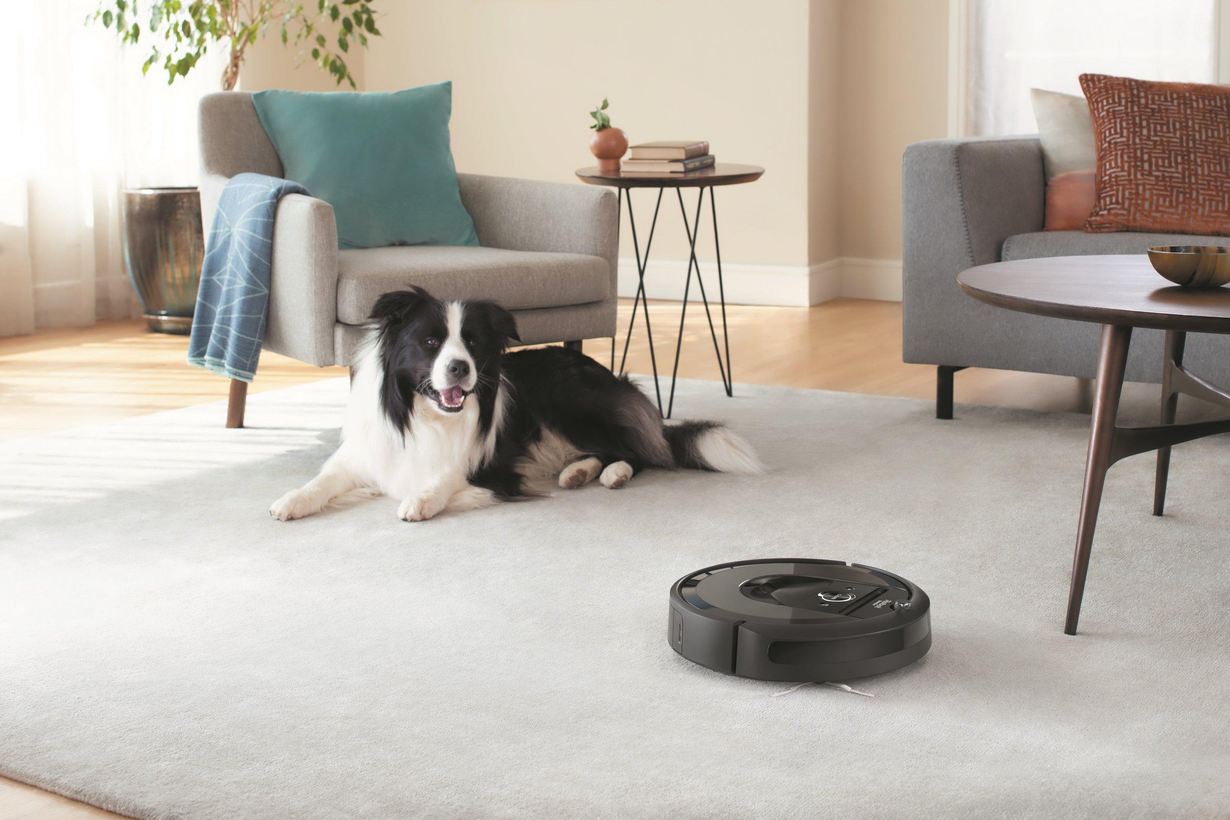 Roomba i7_Lifestyle_Dog_Living Room.jpg