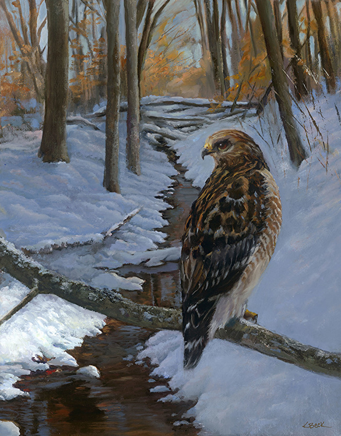 A Winters Red Tail