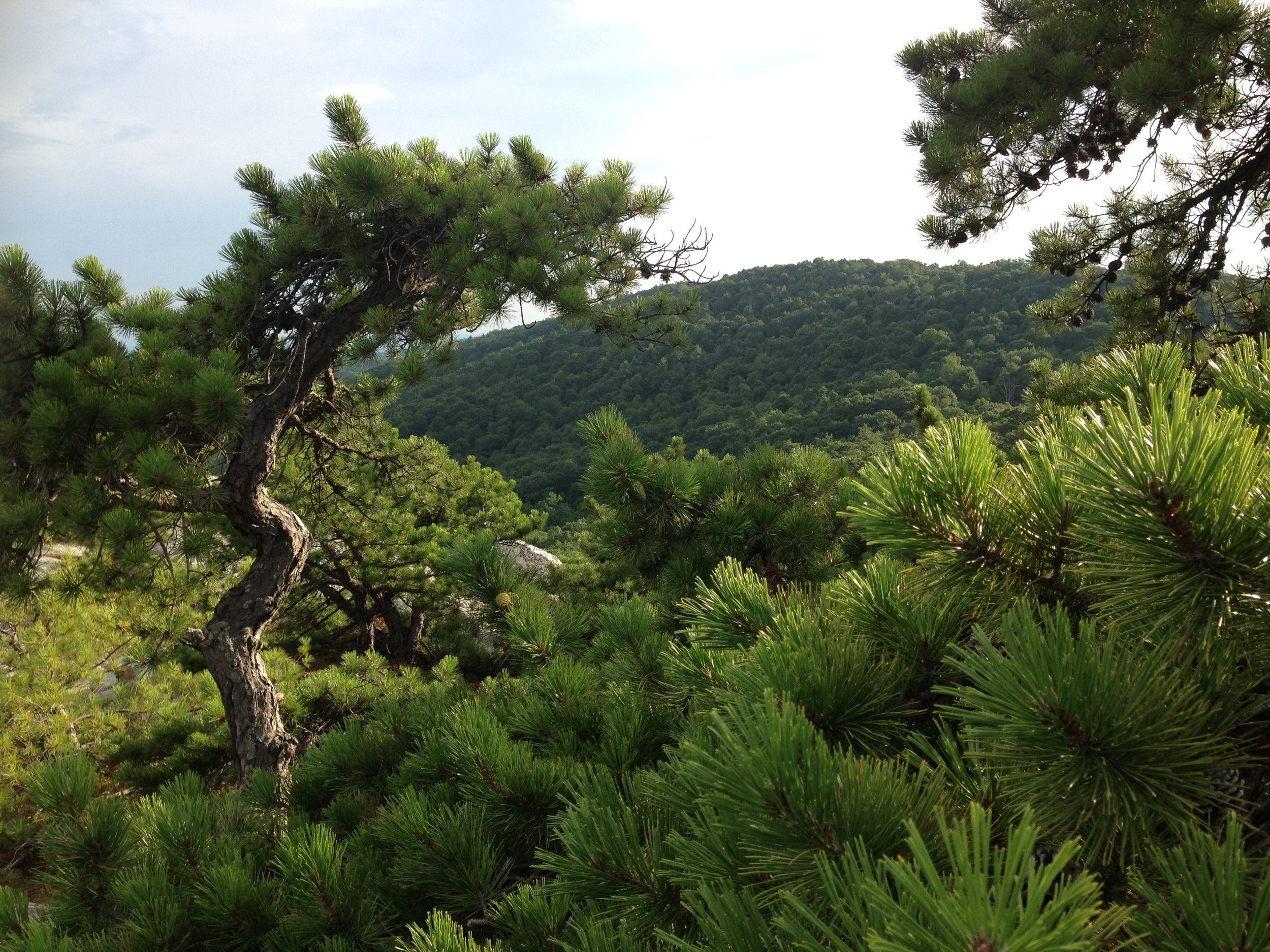 PERSPECTIVES:  the slightest shift in my position on the rock beneath me as I view the landscape through the lens of my camera changes whether I notice the textures of the pine needles in the foreground, the wave of the tree trunk on one side, or the mountain peering back at me in the distance.  I am reminded of my reflections this past week on how I can never really know what someone else's motivation, understanding or experience of a situation may be, that whatever my position is, I can shift ever so slightly and have the opportunity to perceive differently and perhaps connect more clearly to the other person. What questions might I ask to invite relationship?     I also recognize that  a shift in perspective does not change the essence of who I am , merely the possibilities for relationship that emerge when I am curious and engaged with the world around me.