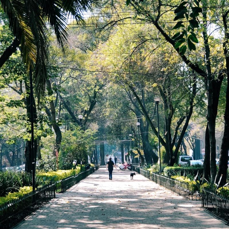 Condesa neighborhood where we stayed