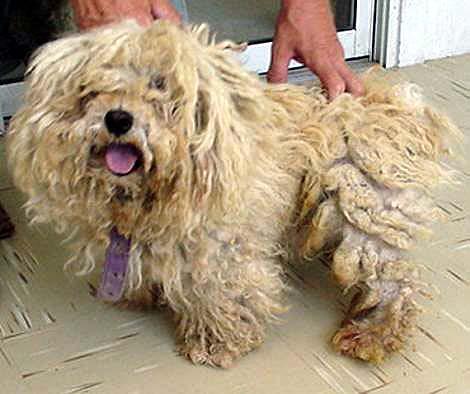 severly matted dog