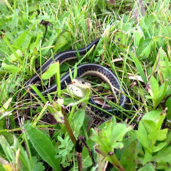 This little guy was chillin in the wild flowers with me. I think he wanted some of my coffee.