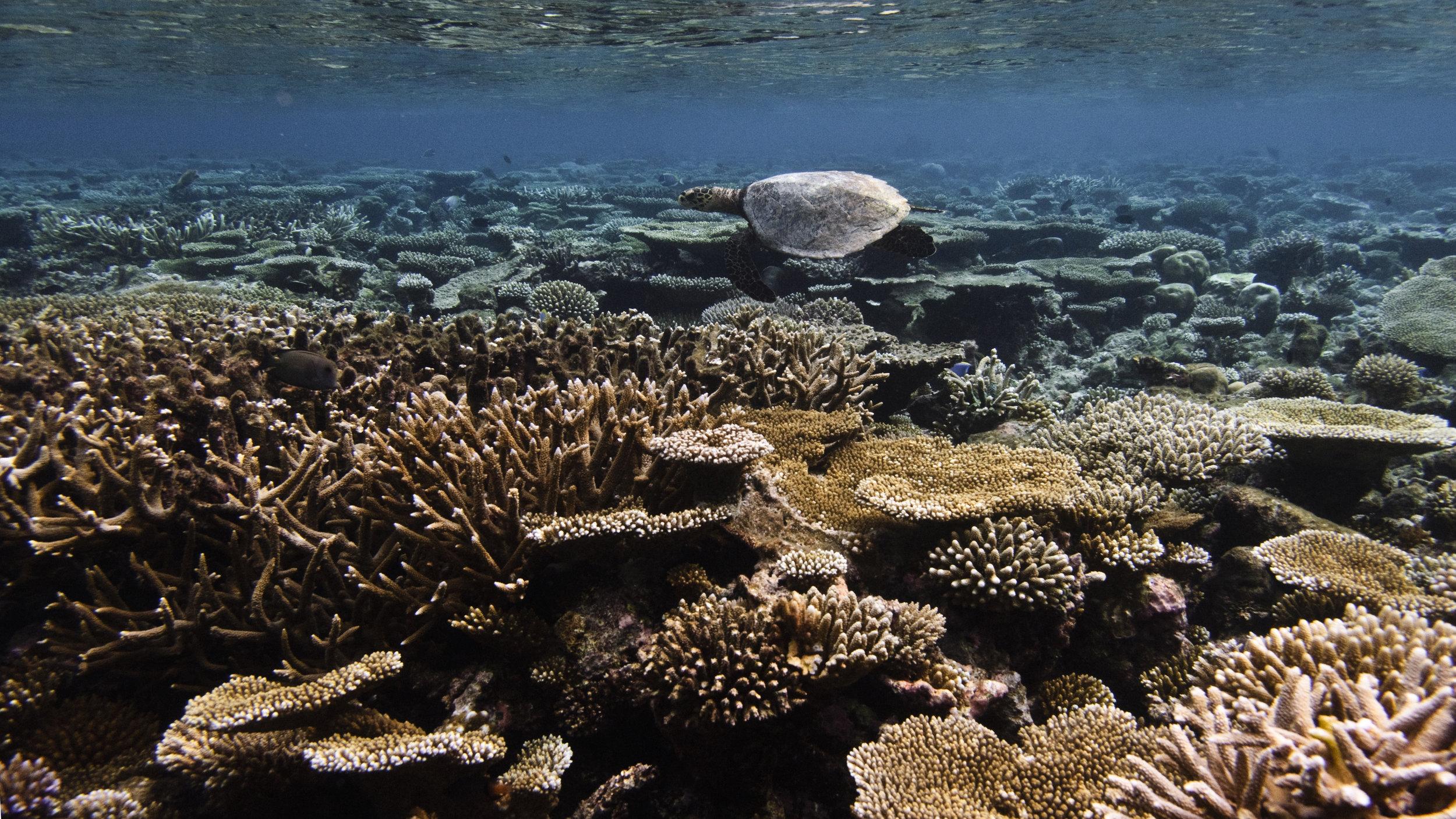 Jumeirah Dhevanafushi - House Reef1.jpg