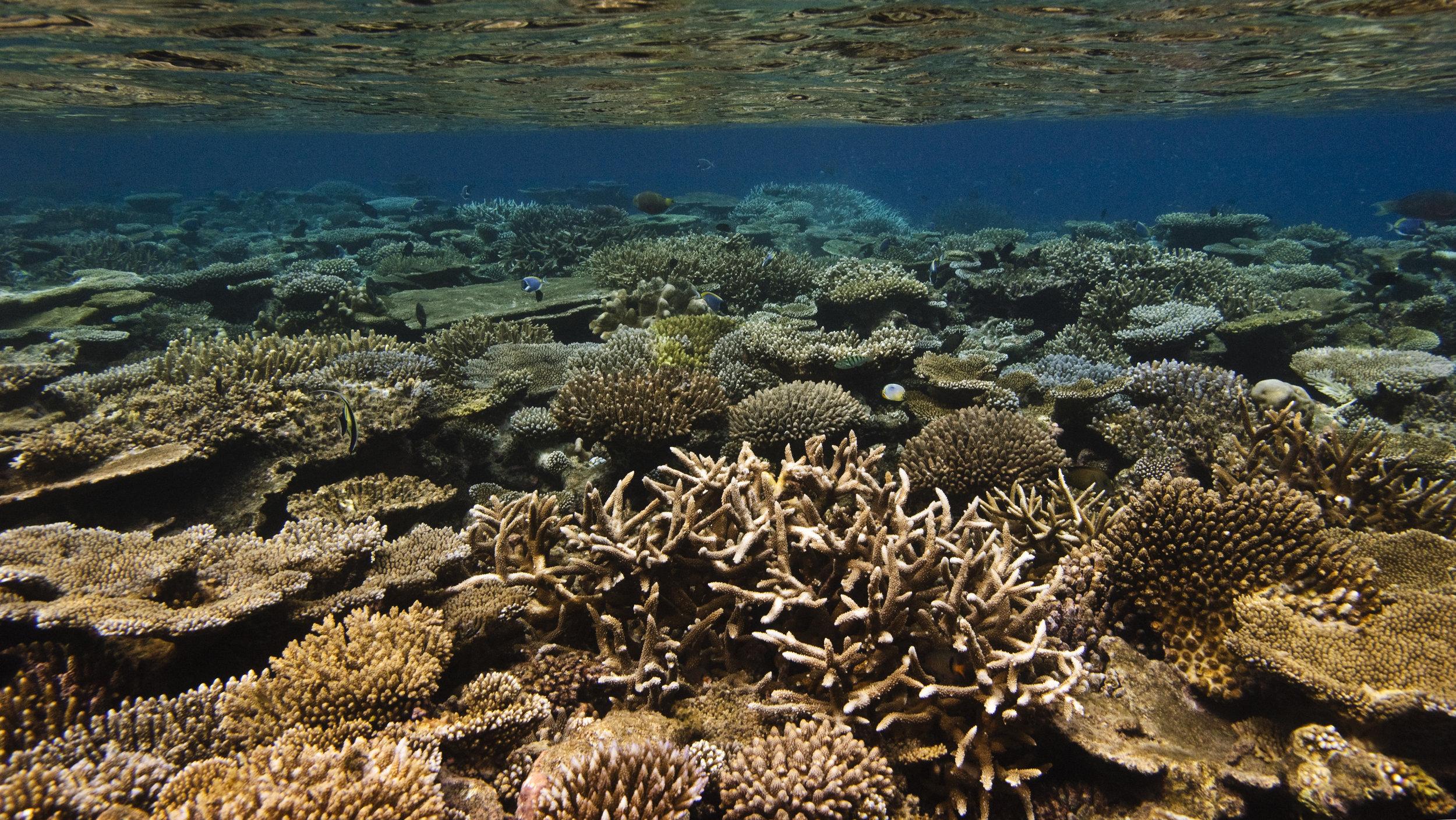Jumeirah Dhevanafushi - House Reef.jpg