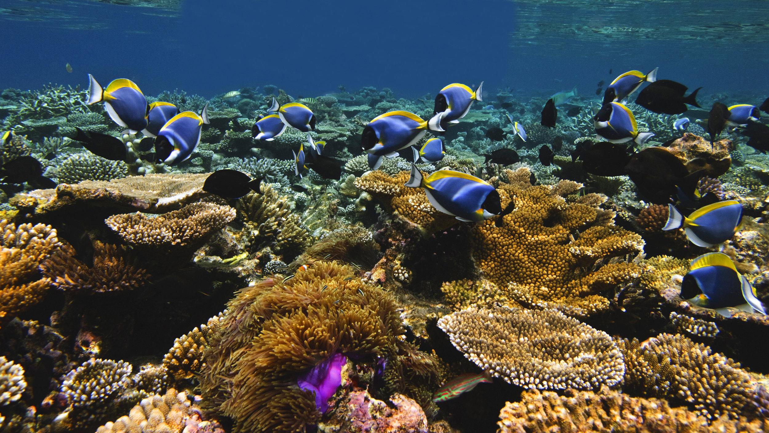Jumeirah Dhevanafushi - House Reef2.jpg