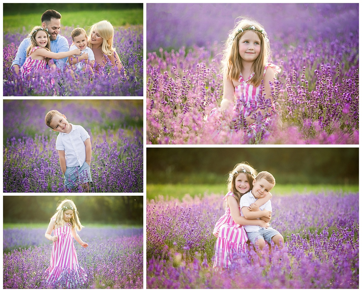 Joy of Life Photography Orangeville Lavender Sessions 1
