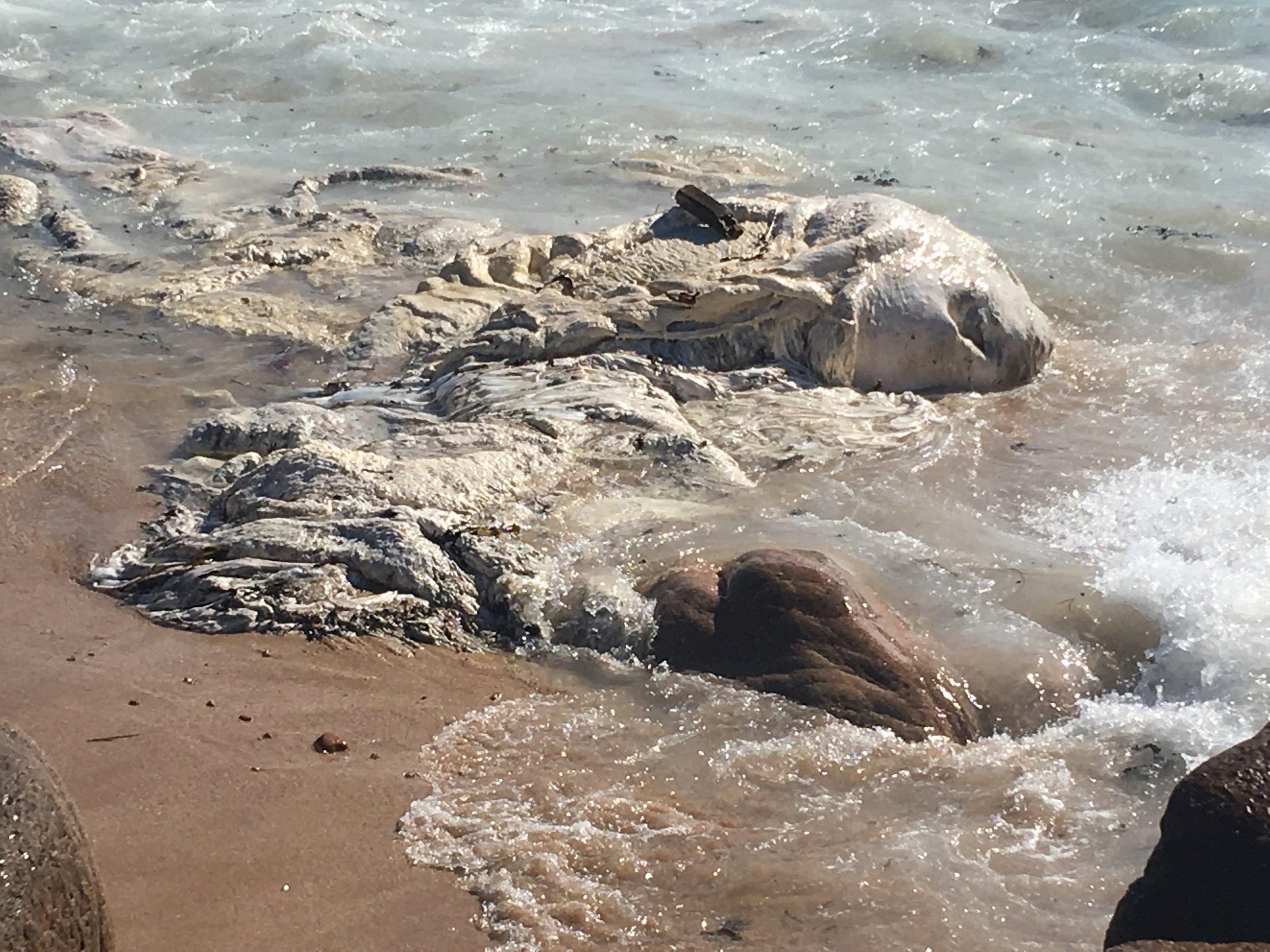 It's sea foam! No, it's a cuttlefish! No, it's a dead whale!