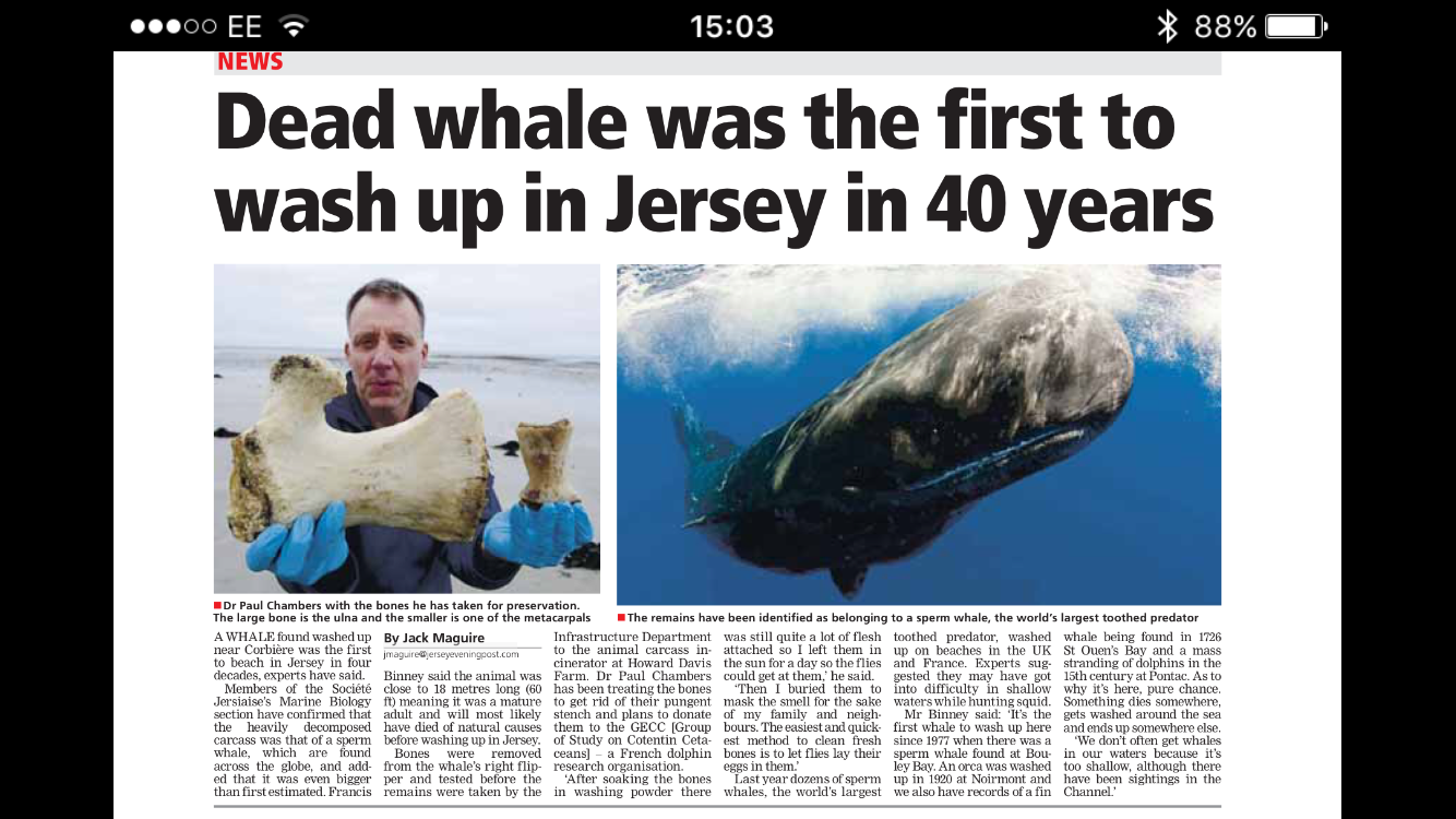 Whales news heard 'round the world.