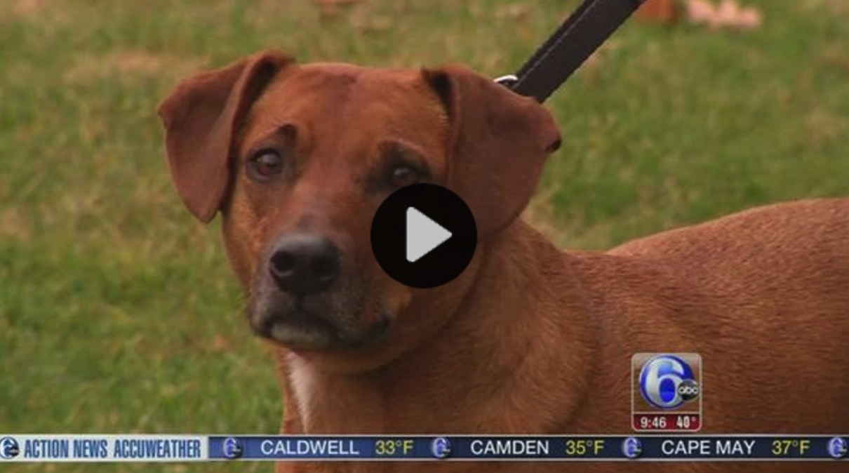 Shelter Me: Shelter Dog Brings Happiness - 6ABC VIDEO