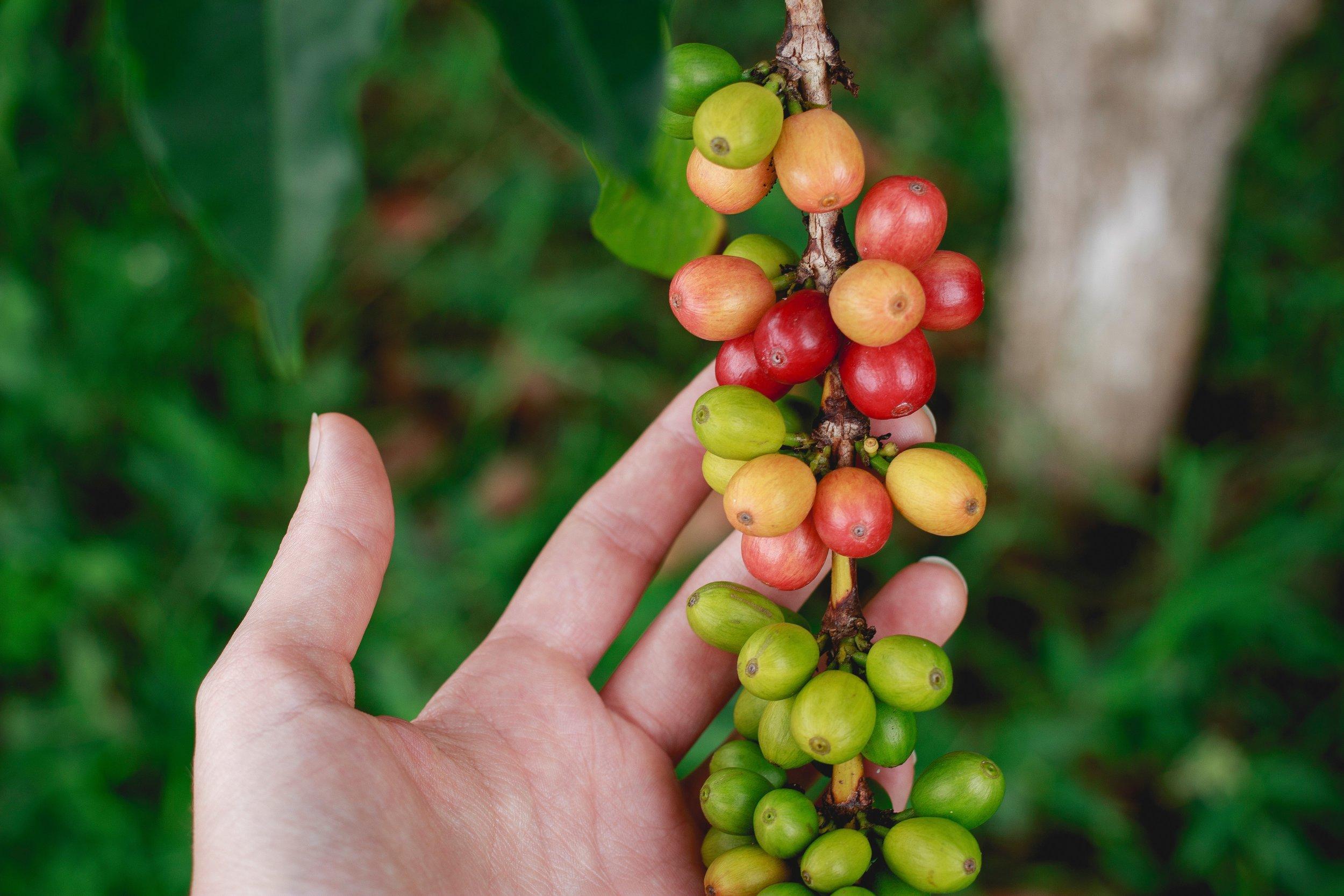 seed, cup, coffee, class
