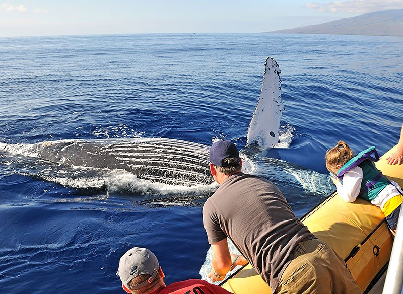 maui-whale-watching-gallery-17.jpg
