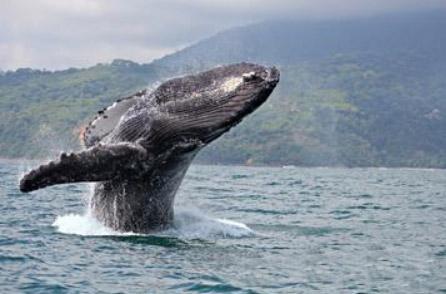 Ocean_Project_Whale.jpg