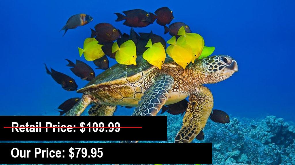 Maui-Reef-Adventures.jpg
