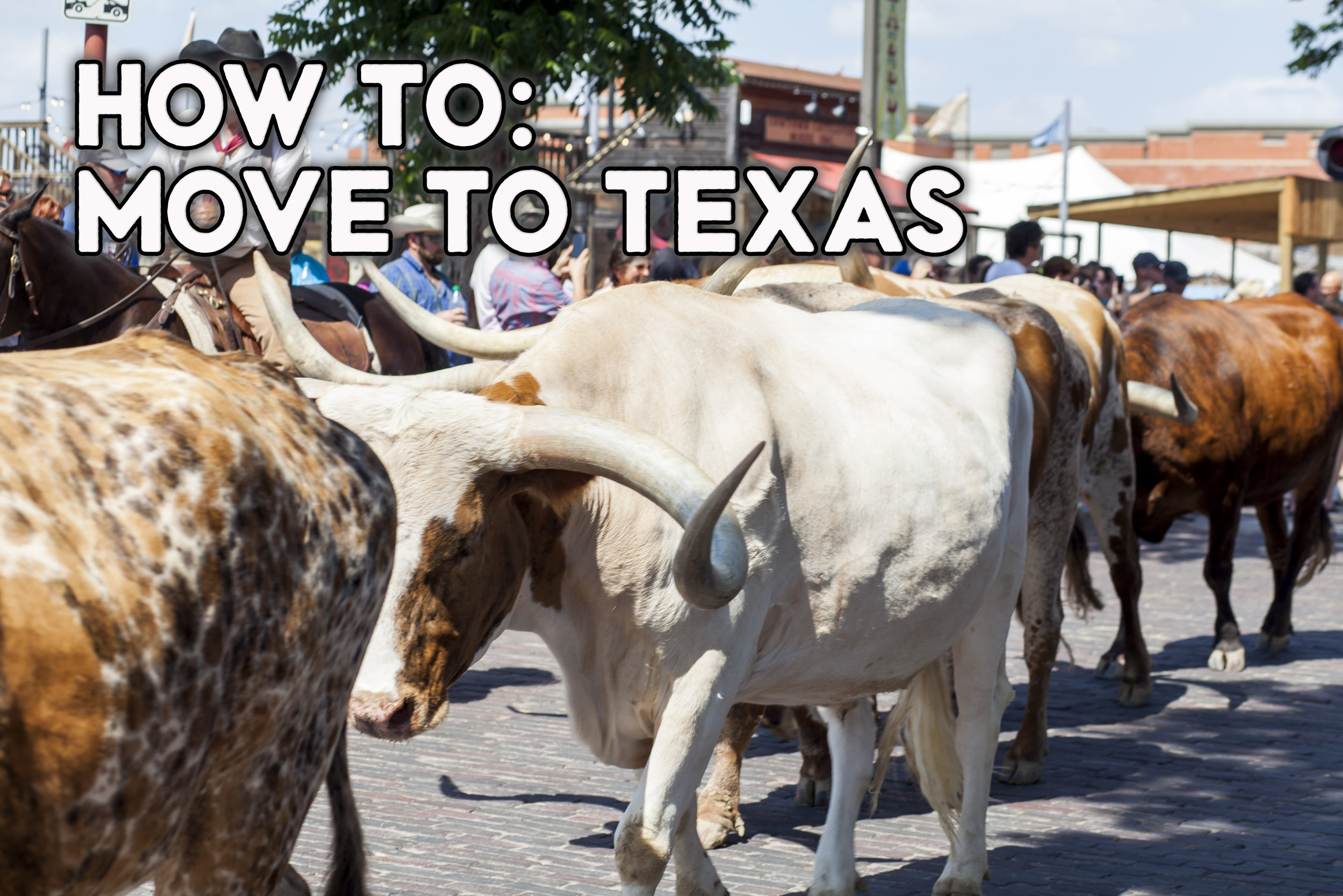how to move to texas.jpg