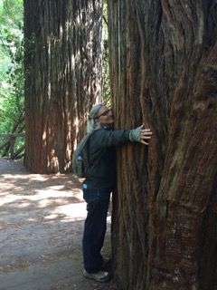Hugging a redwood... so THIS is what being grounded feels like!