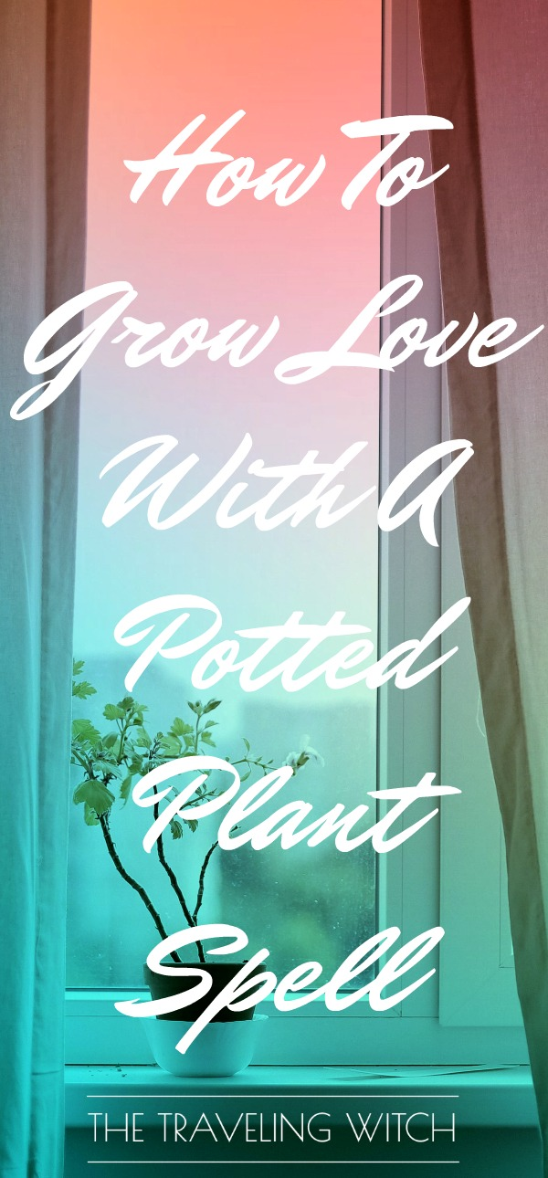 How To Grow Love With A Potted Plant Spell // Magick // Witchcraft // The Traveling Witch