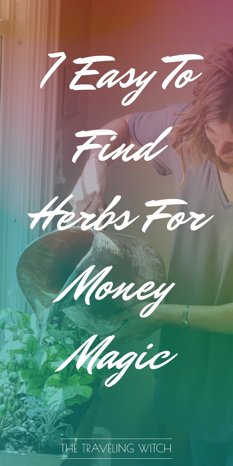 7 Easy To Find Herbs For Money Magic by The Traveling Witch