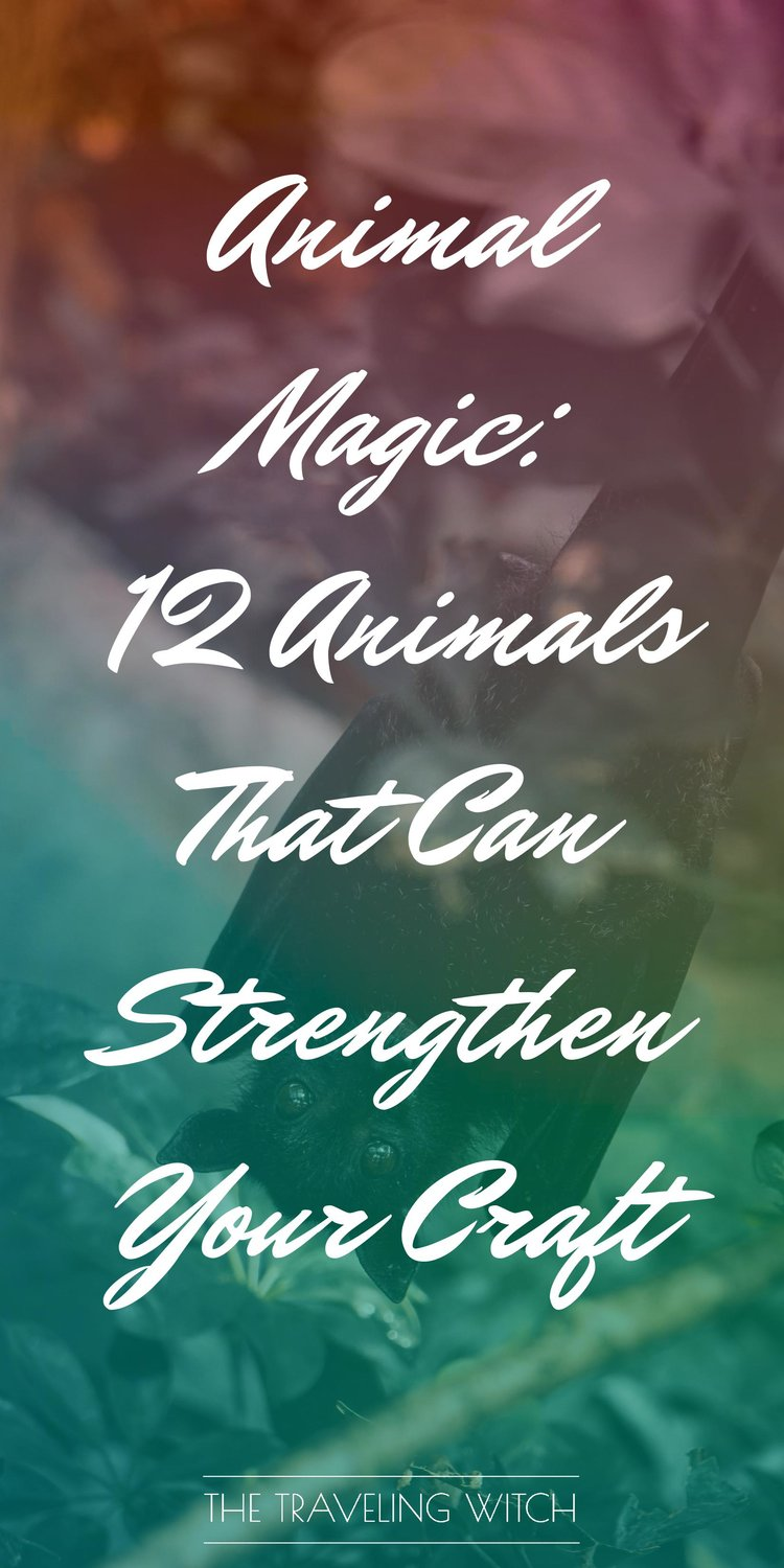 Animal Magic: 12 Animals That Can Strengthen Your Craft by The Traveling Witch #Witchcraft #Magic