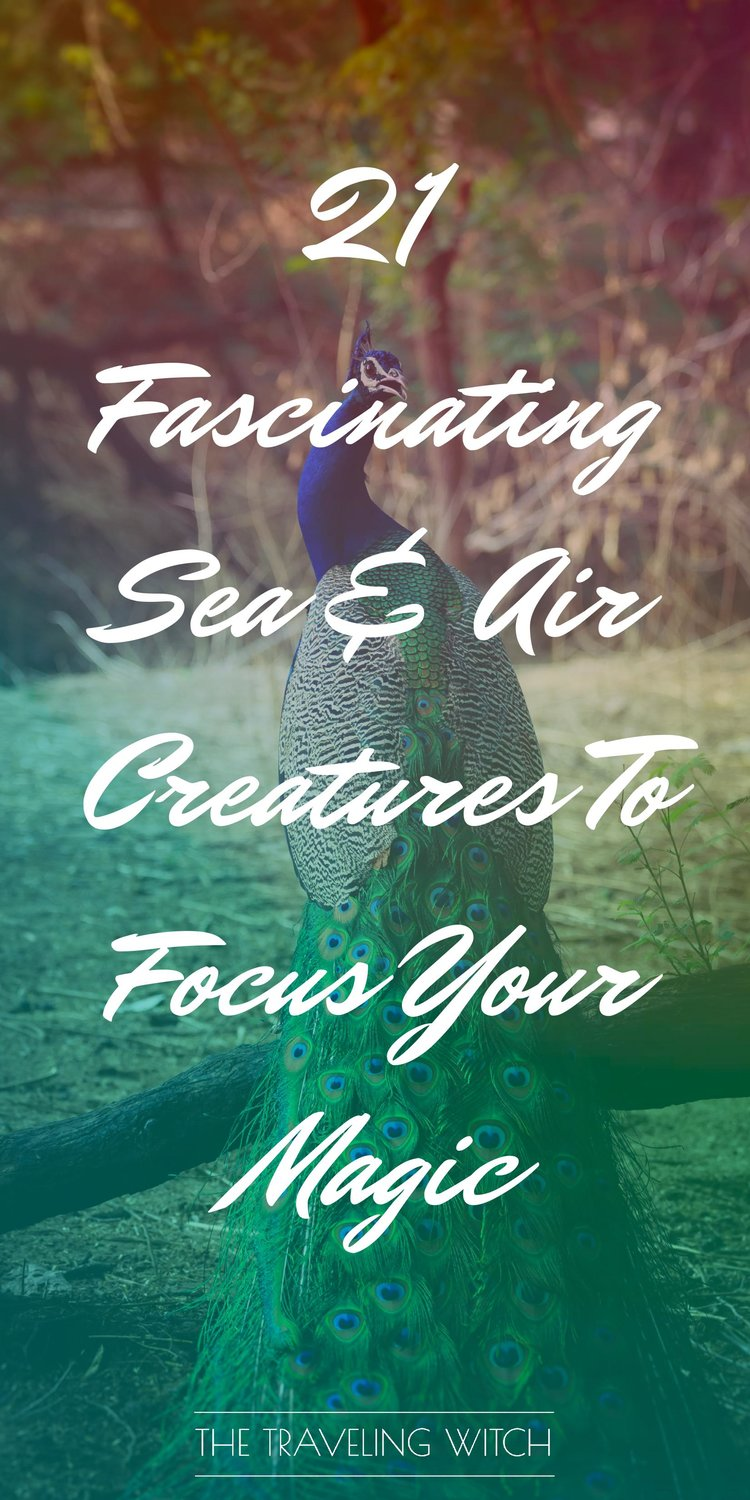 21 Fascinating Sea & Air Creatures To Focus Your Magic by The Traveling Witch #Witchcraft #Magic