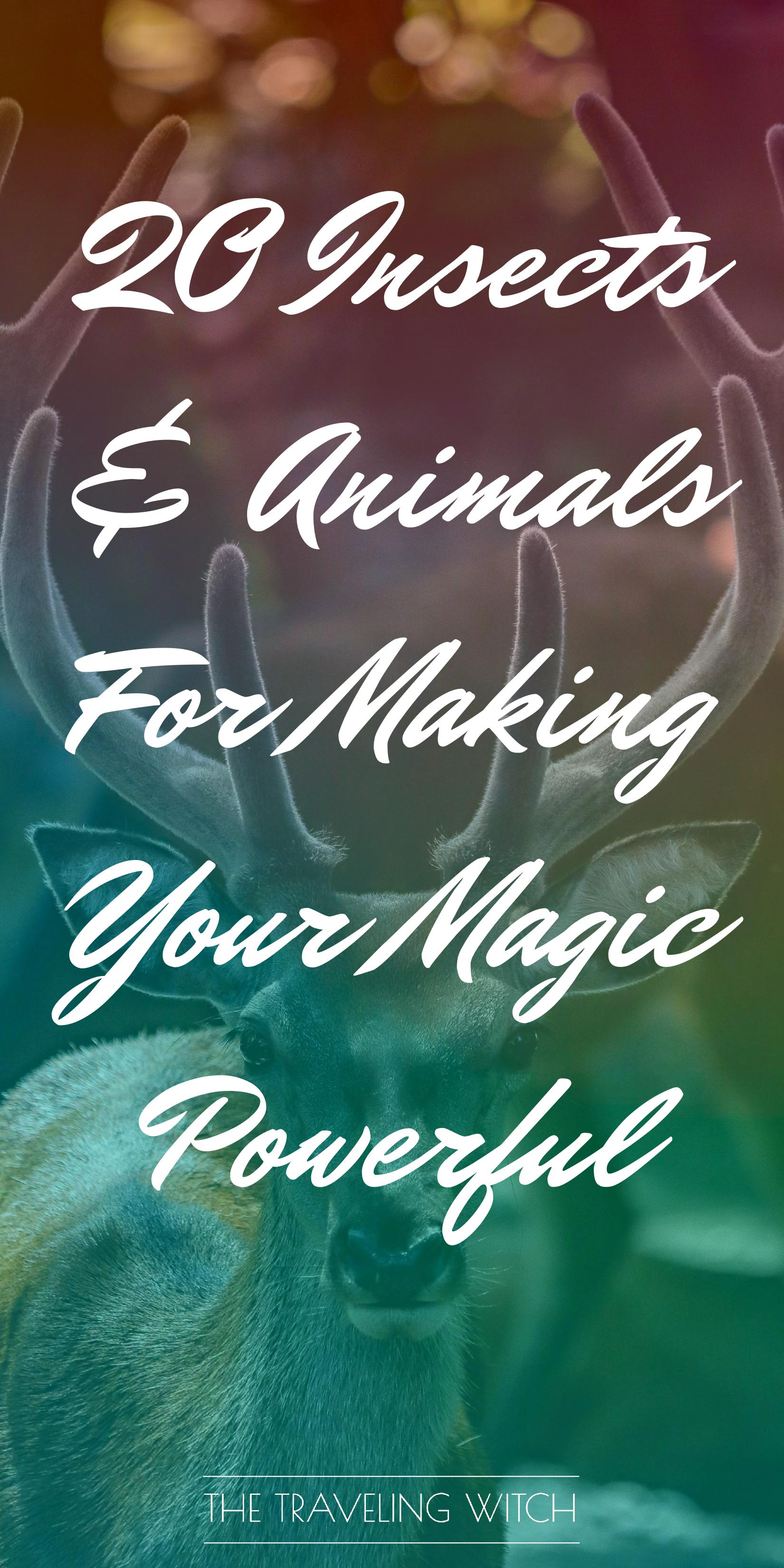 20 Insects & Animals For Making Your Magic Powerful by The Traveling Witch #Witchcraft