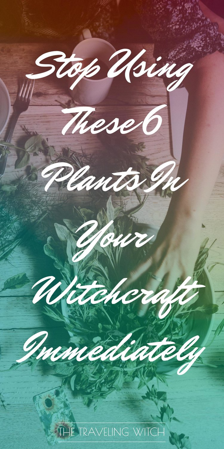 Stop Using These 6 Plants In Your Witchcraft Immediately // The Traveling Witch #magic