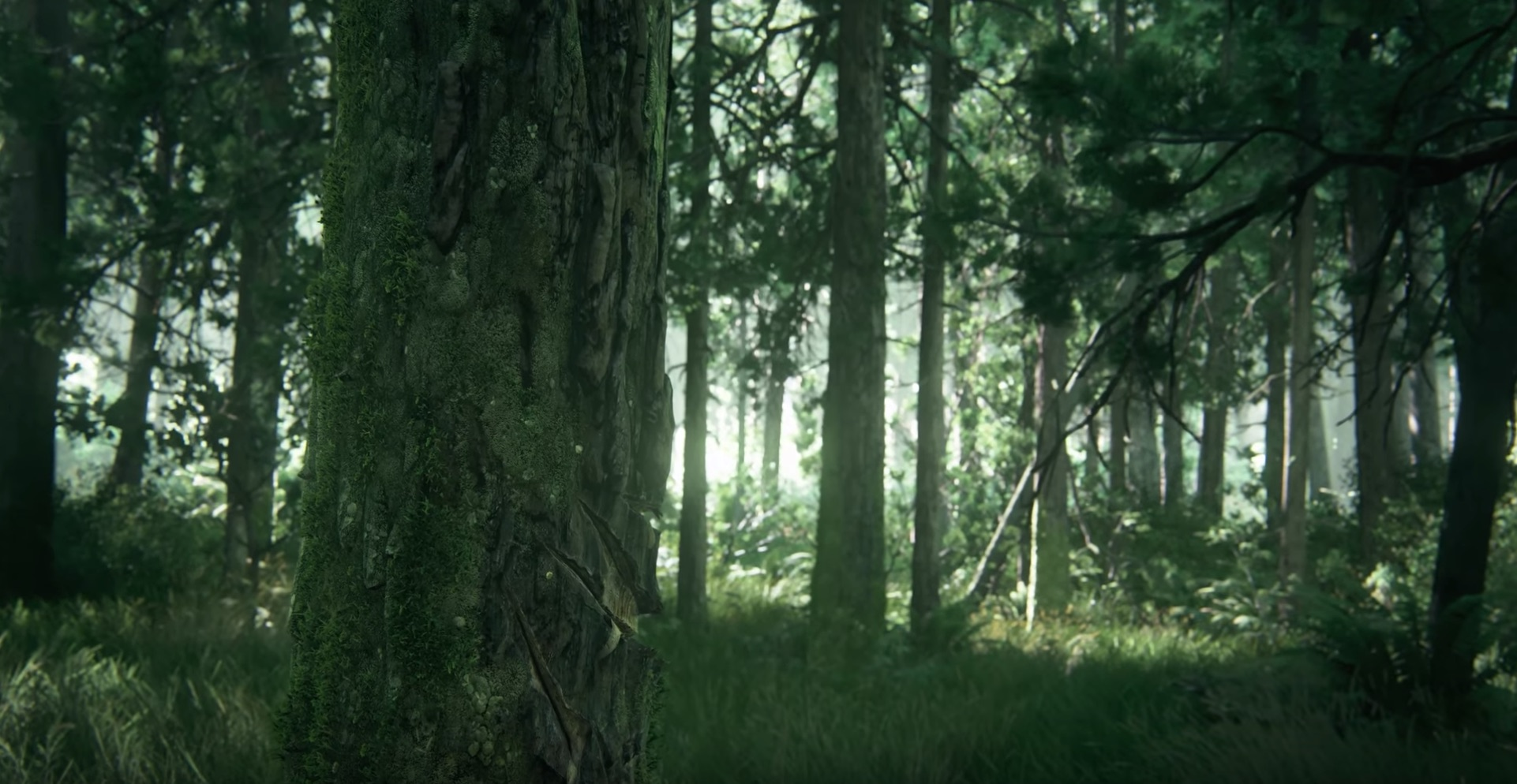 The second shot has a closeup of a tree which is scratched up. This still offers no story or setting details. Is the scratch made by a bear? Is it made by a machine?