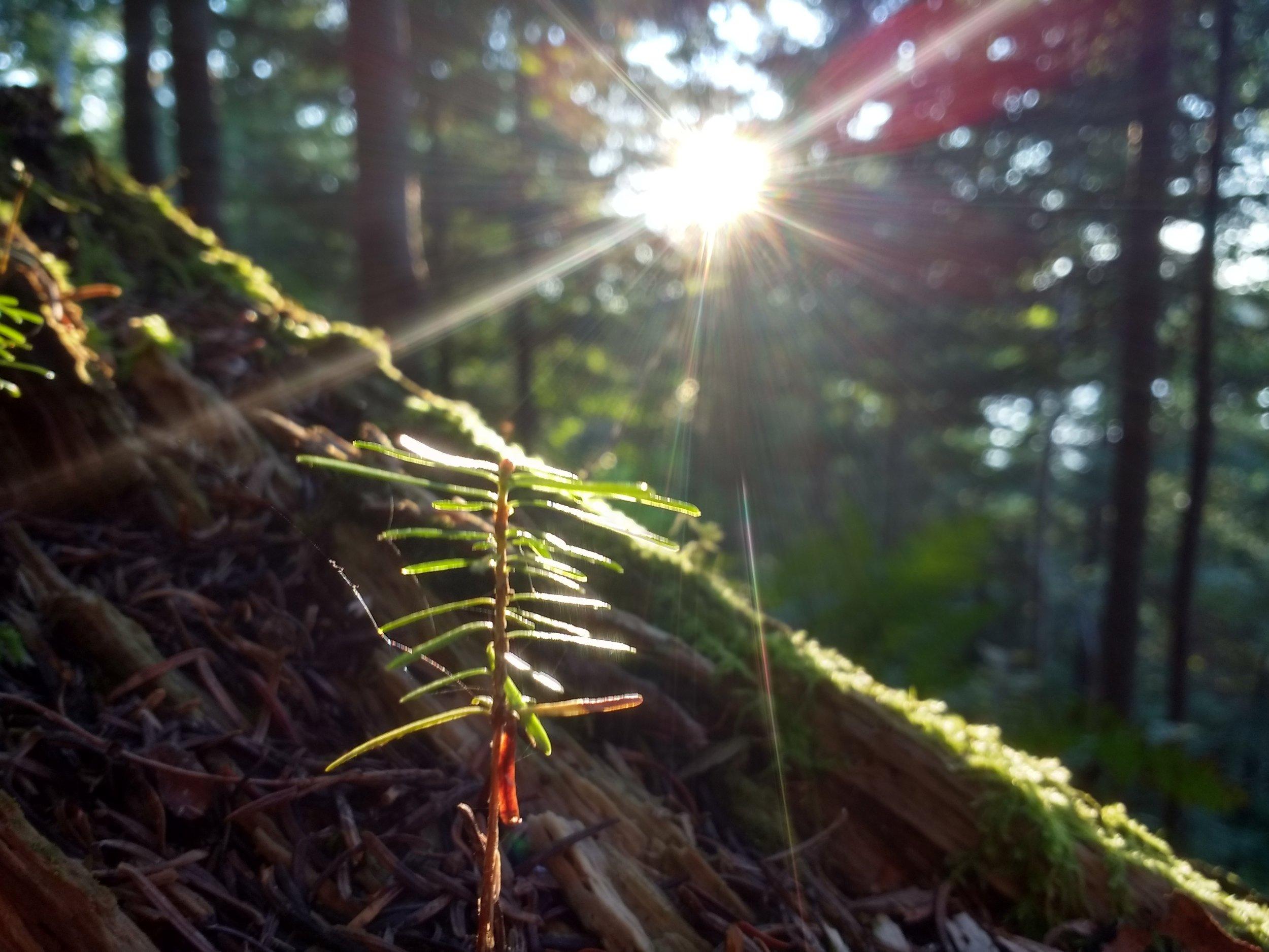 Loon Lake lil pine IMG_20180807_193015375_HDR.jpg