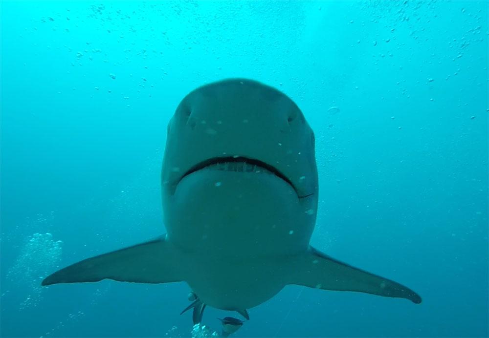 Shark$---Production-Stillsm.jpg