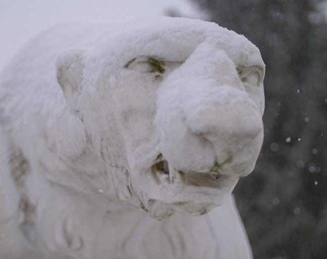 polar bear legacy-poster.jpg