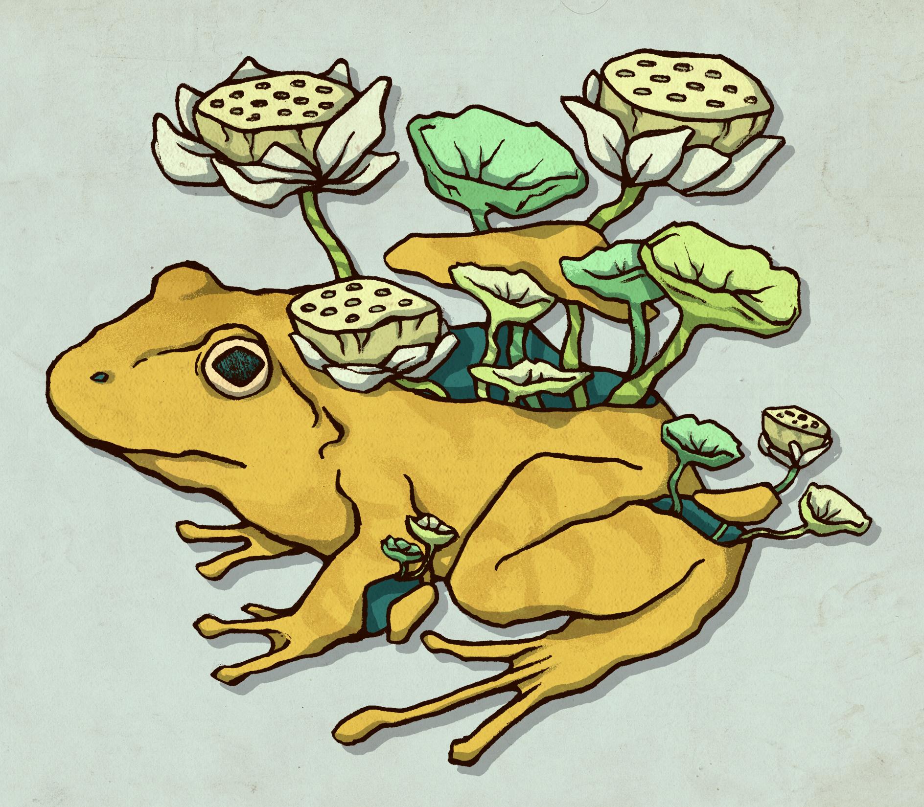 2_froglotus.jpg